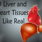 3D Liver and Heart Tissues are being made in Laboratories, functions like real organs