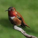 Birds songs study: Provides Clues to Disorders in Human Speeches
